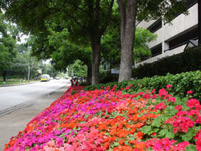 parking structure with flower, shrub and tree border by sidewalk - landscape maintenance