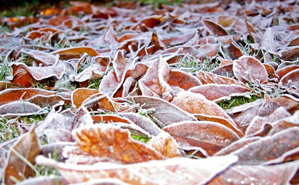 frost covered leaves on lawn - winterizing lawns